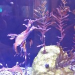 Five Reasons to Visit to the Birch Aquarium in San Diego