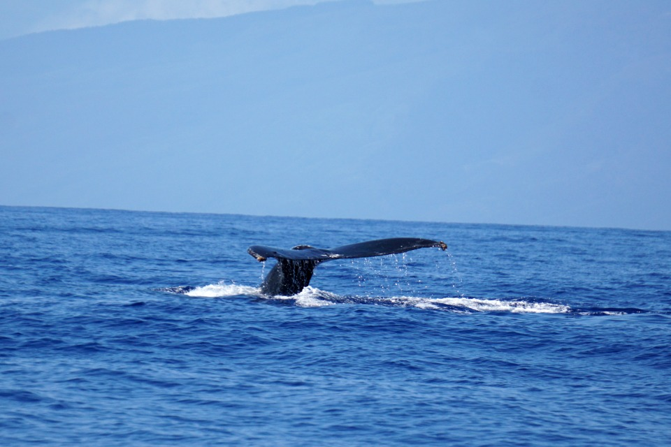 whales 19