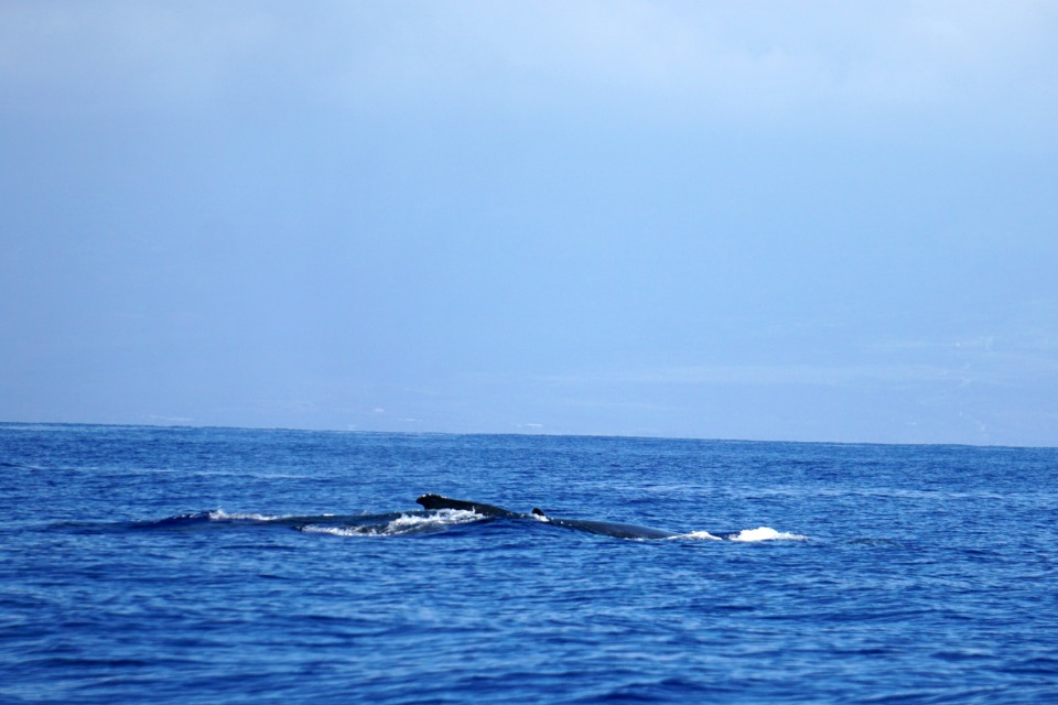 whales 2