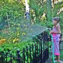 How to Start a Backyard Vegetable Garden