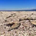 10 Things to See at the Salton Sea
