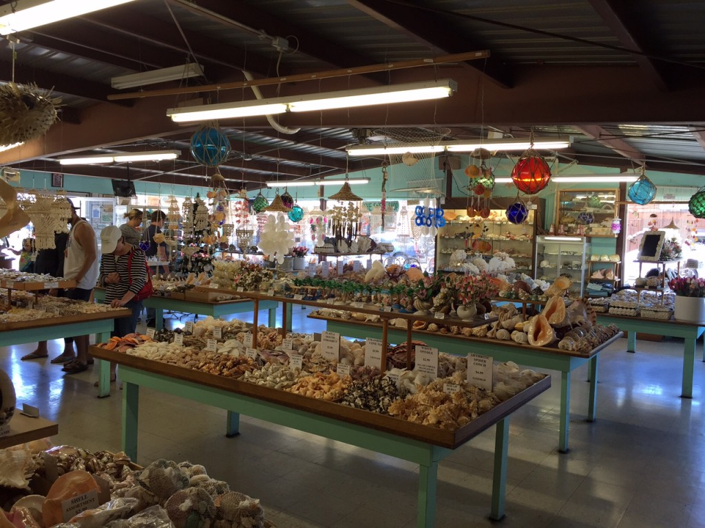 The inside of The Shell Shop in Morro Bay