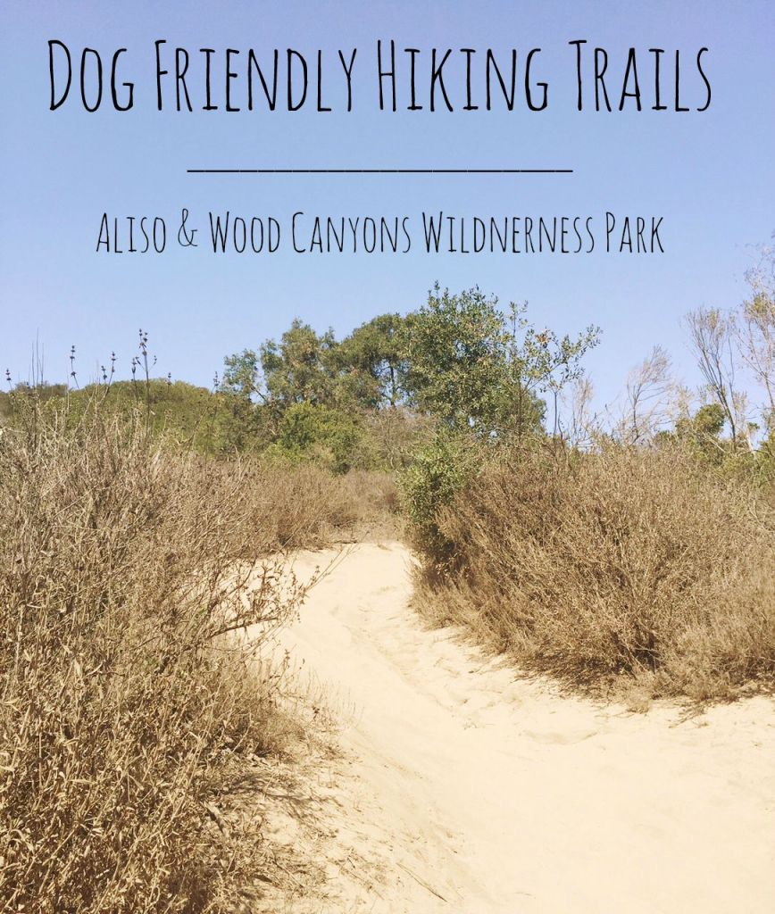 Dog Friendly Hiking Trails in the Aliso and Wood Canyons Wilderness Park