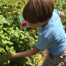 Berry Picking and Apple Cider Mini Donuts at Snow-Line Orchard