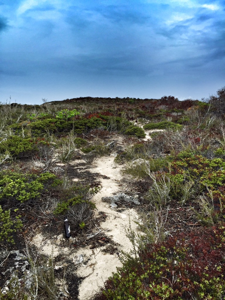 Hiking trail near Taylor Bay in the Turks and Caicos