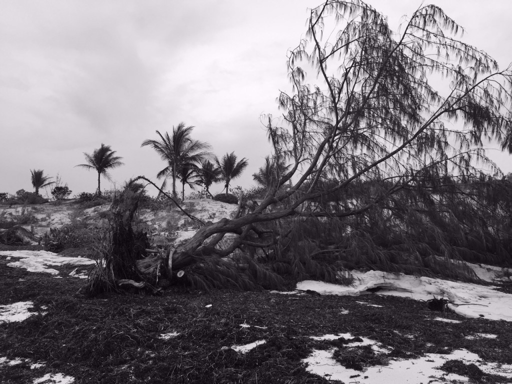 A fallen tree in the Turks and Caicos