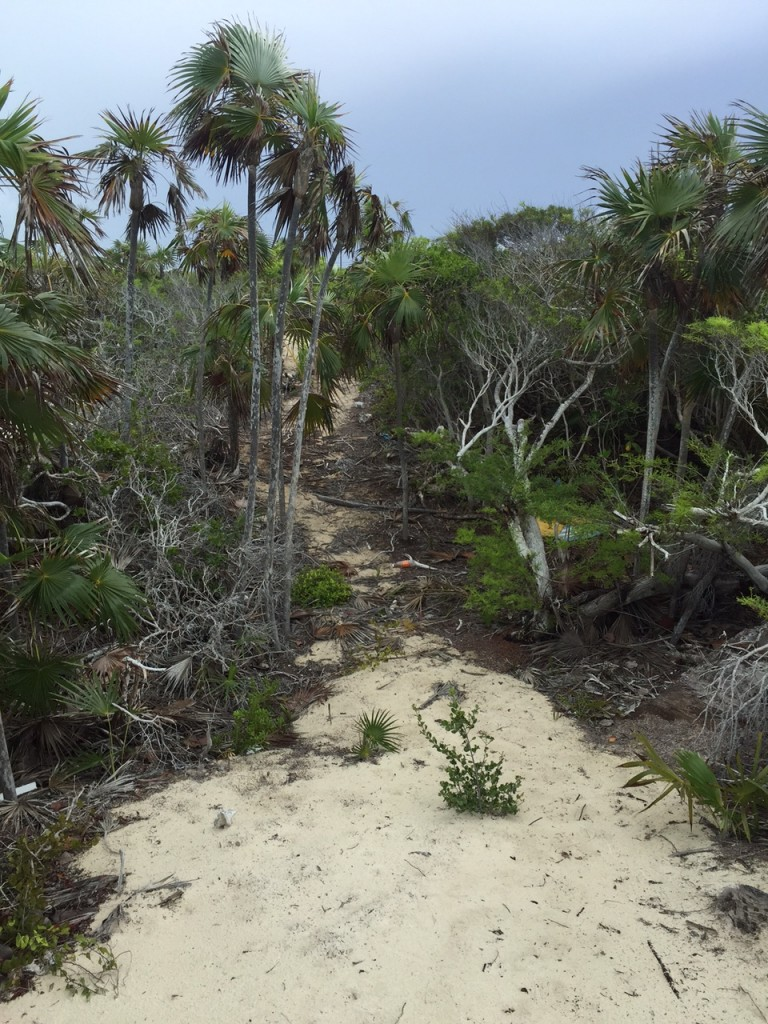 Path to the main road from Long Bay Beach in the Turks and Caicos