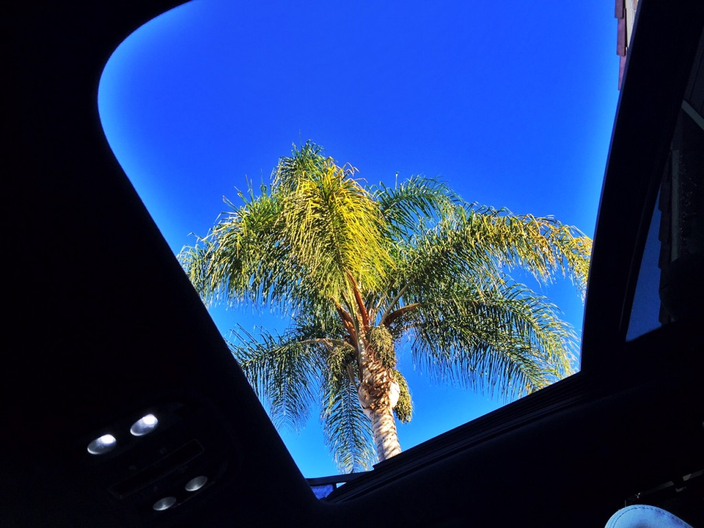 Looking at Palm Trees through the sunroof of the Kia Sorento