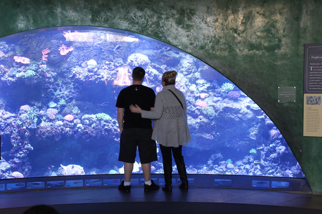 Looking at fish at the aquarium of the pacific