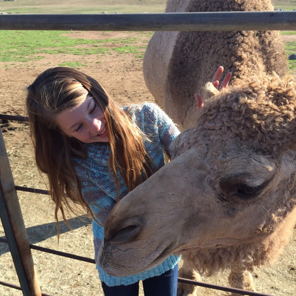 Petting a Camel