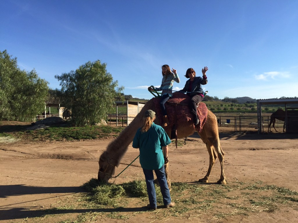 Riding on a camel