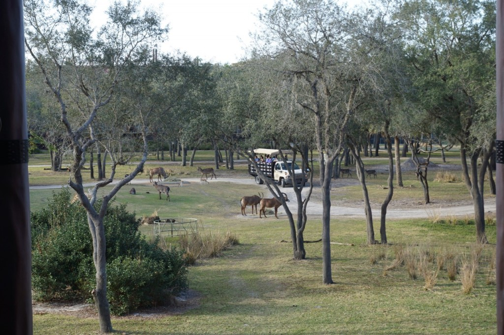 taking a safari ride at animal kingdom lodge
