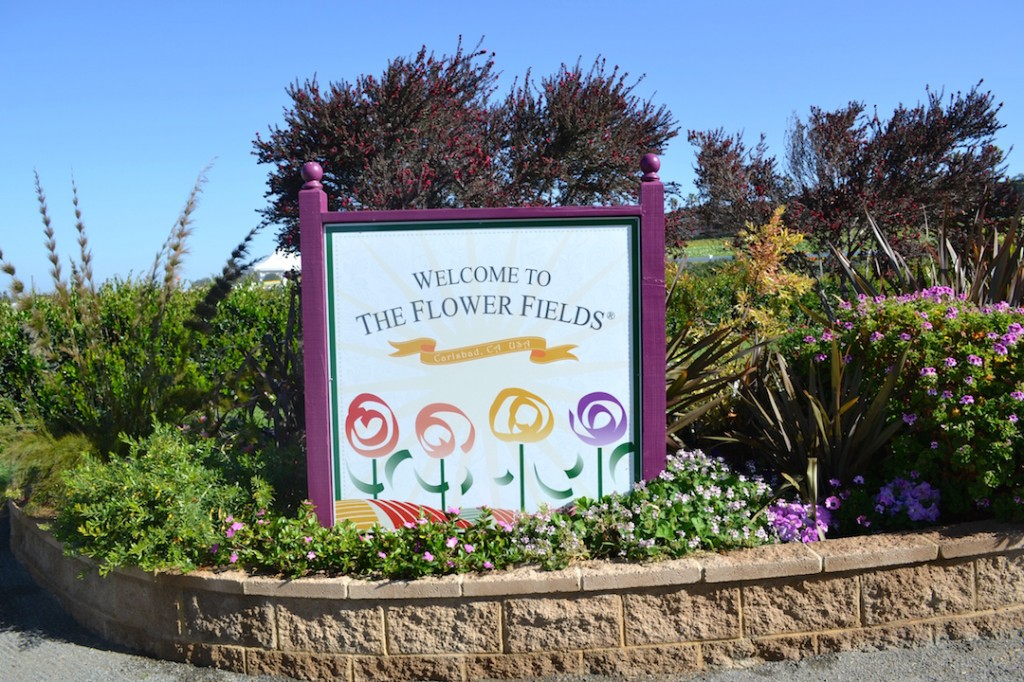 Entrance to the flower fields