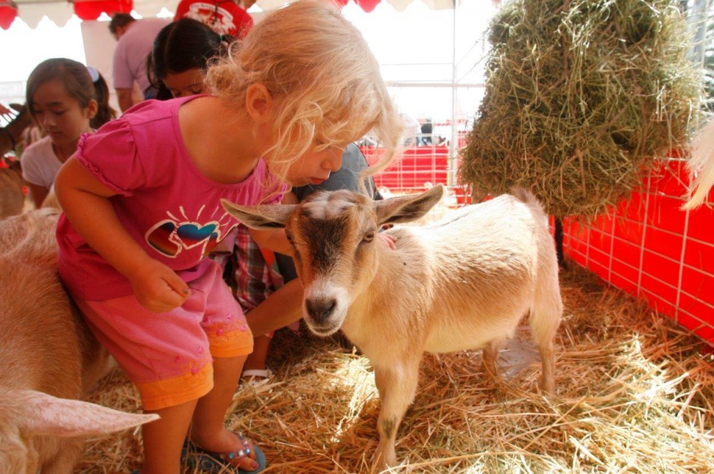 Petting Zoo at the Pet Expo