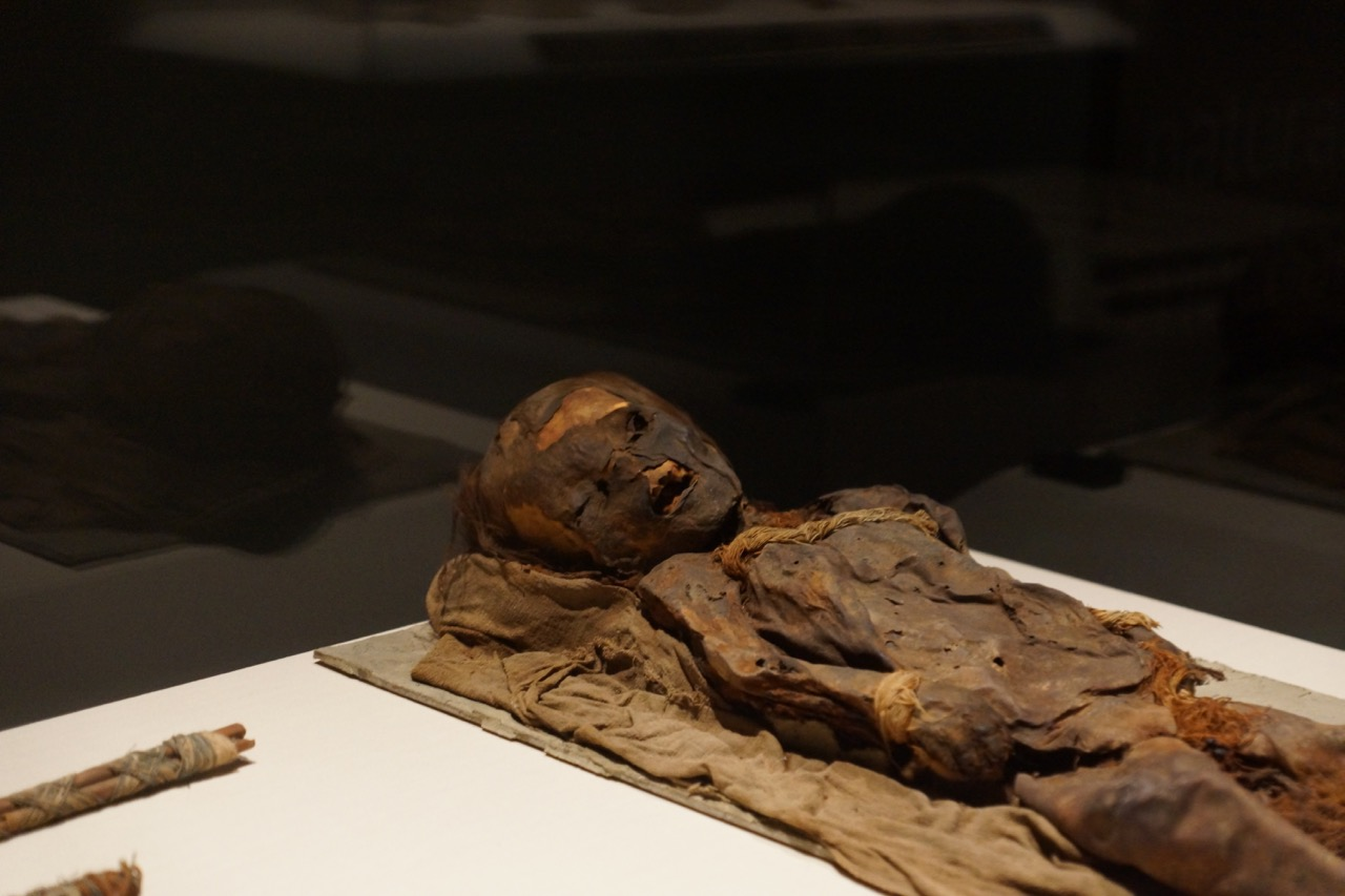 learning about mummies