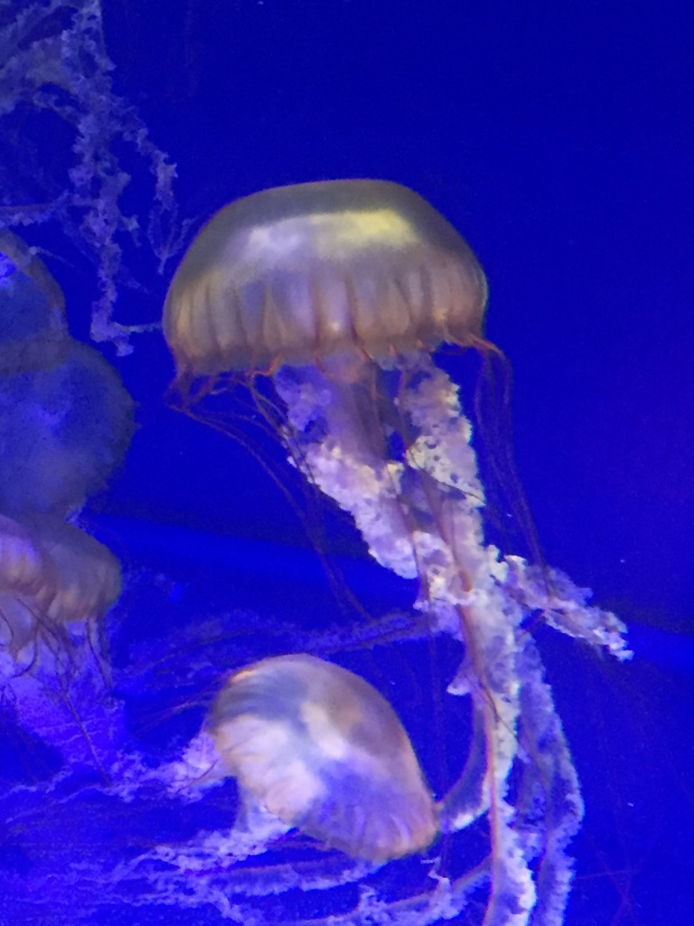 Cool jellies at the aquarium