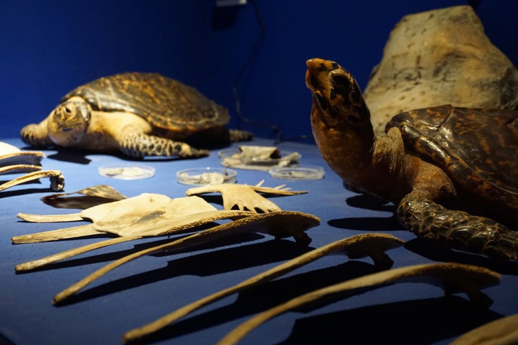 Educational sea turtle exhibit