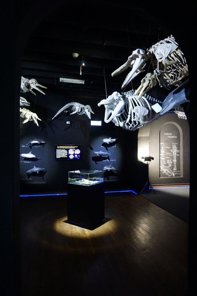 World's largest collection of animal skeletons