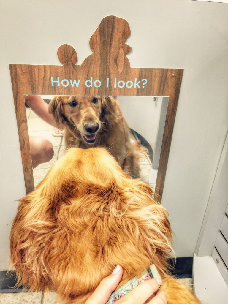Daisy looking into the mirror at Petco