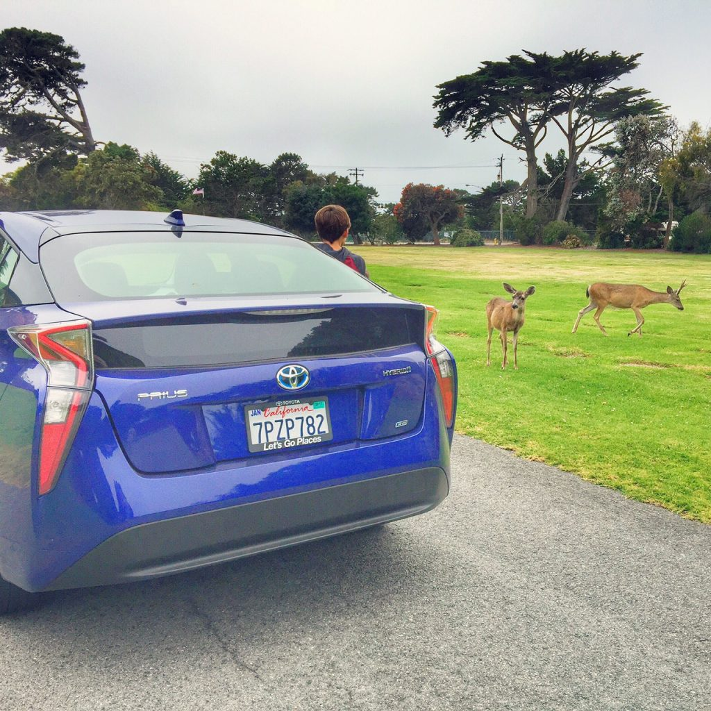 2016 Prius exploring the outdoors