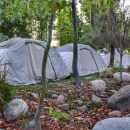 A 'Wild' Night Camping at the San Diego Zoo