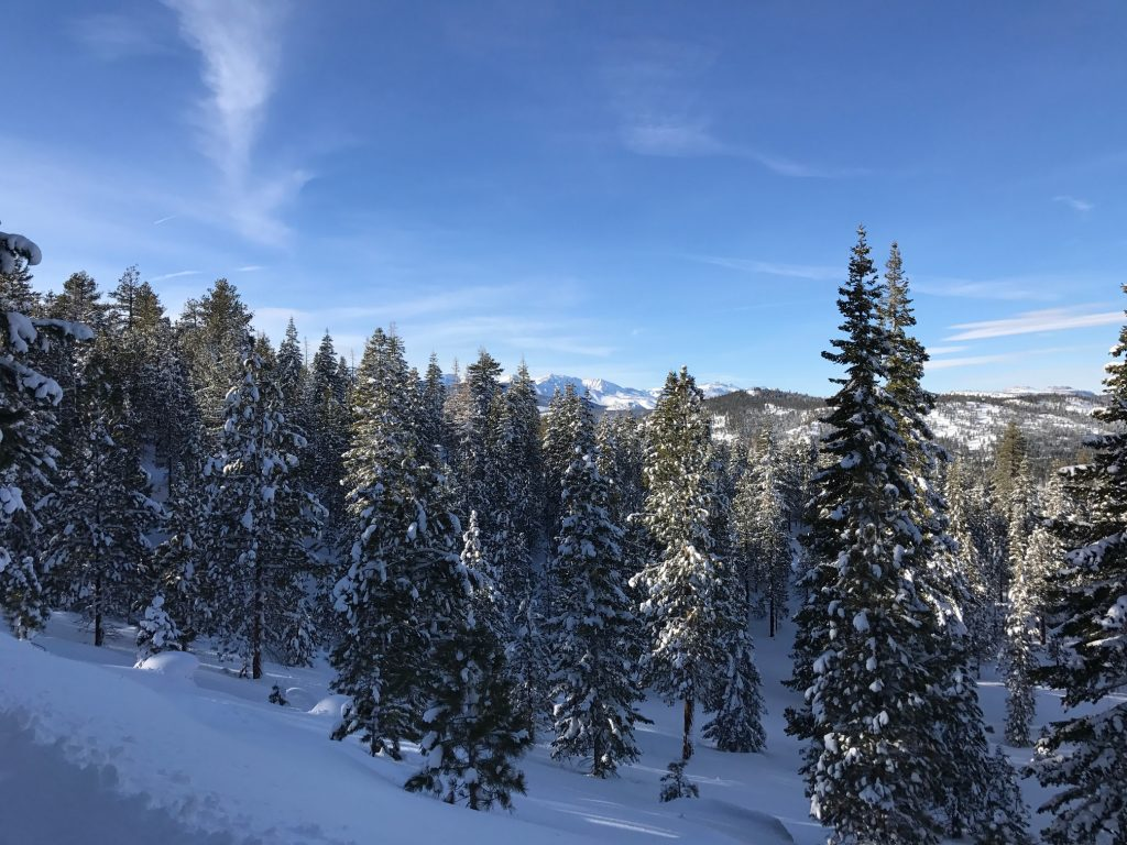 Snow covered trees in Mammoth