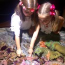 New Summer Exhibits at the Aquarium of the Pacific