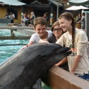 Three Fun Things to do at SeaWorld this Summer