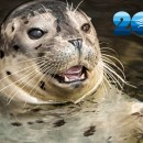 Celebrate the Aquarium's 20th Anniversary For Just $20!