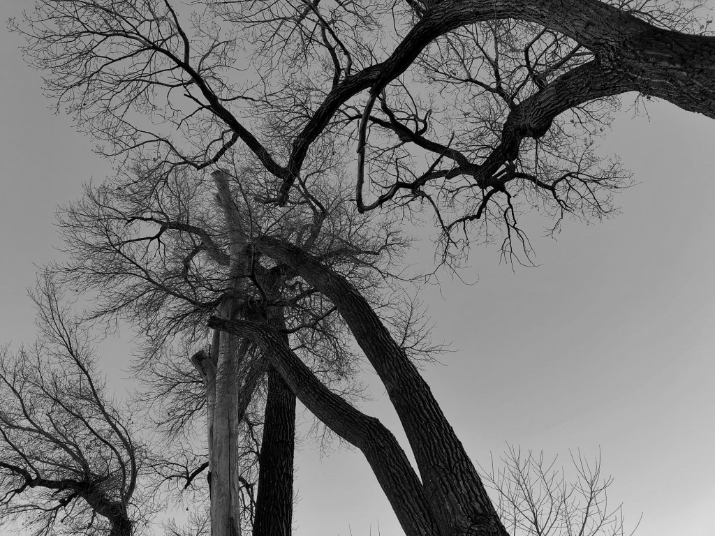 The history of The Hanging Tree in Genoa Nevada