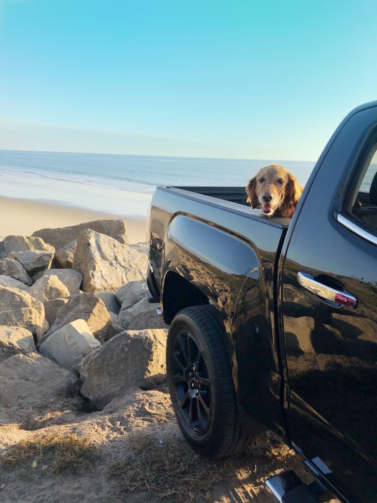 Pet-friendly beach in Ojai