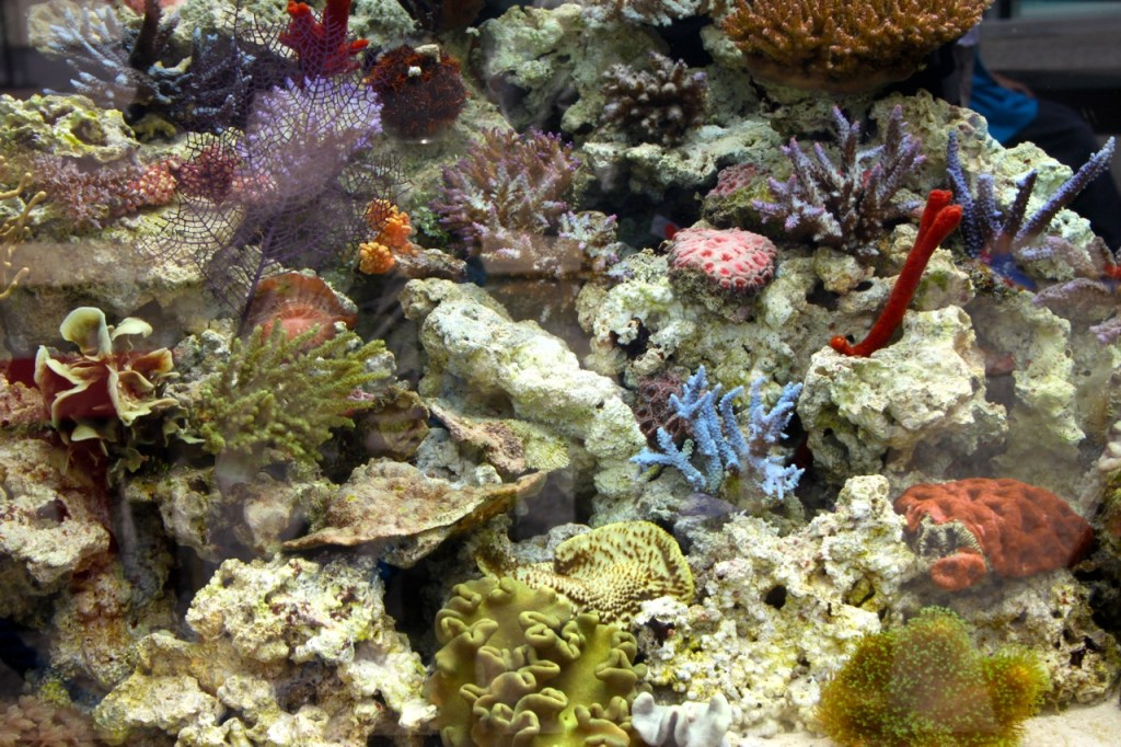 Sea life at the Aquarium of the Pacific