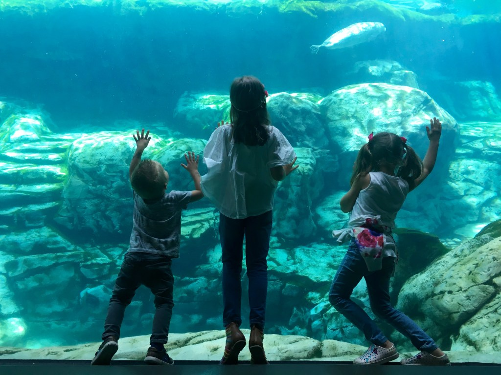 The magic of The Aquarium of the Pacific