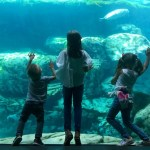 Aquarium of the Pacific: 16th Annual Festival of Human Abilities