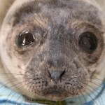 Pacific Marine Mammal Center: Camp Pinniped