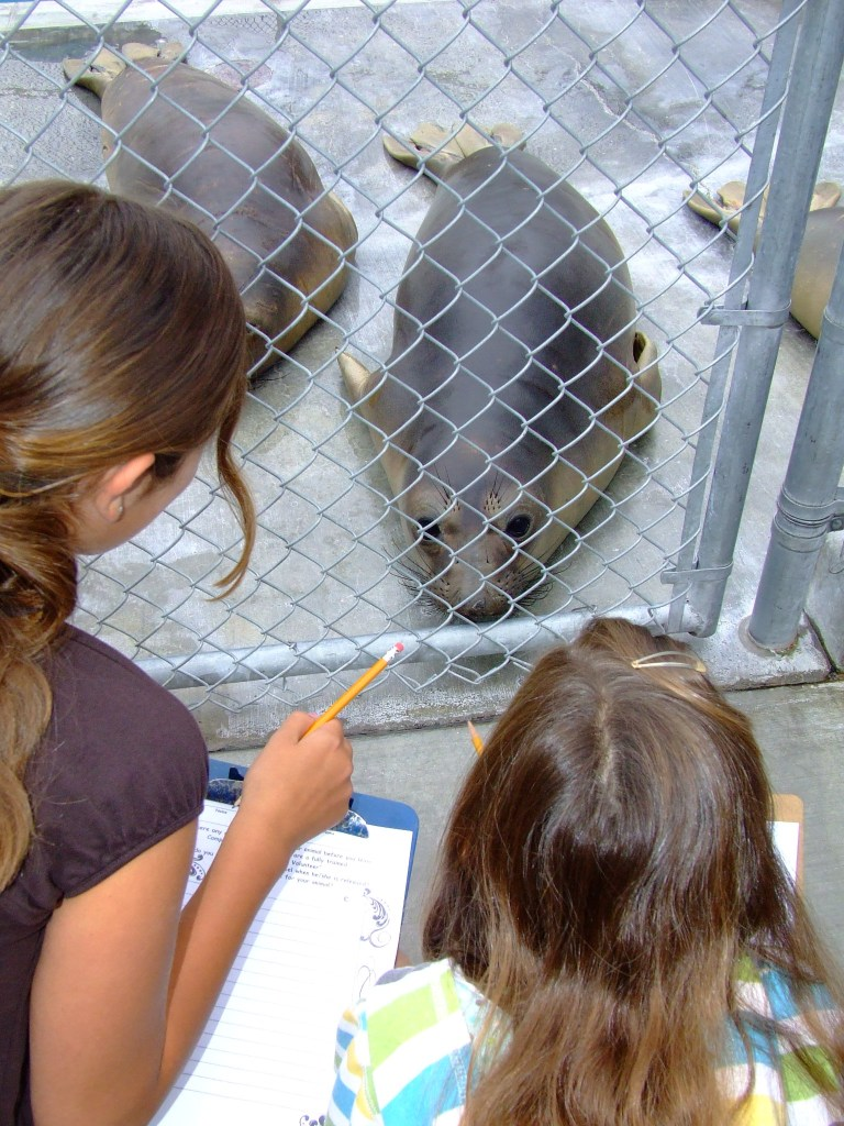 Kids helping animals at the Pacific Marine Mammal Center