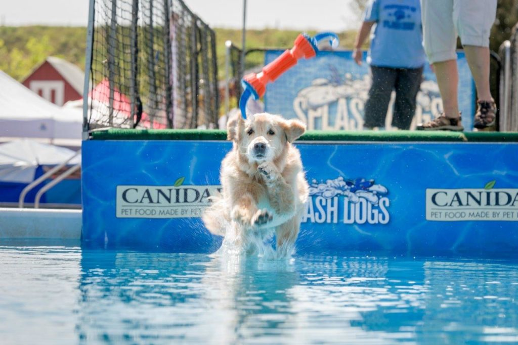 Swimming dogs at the America's Family Pet Expo