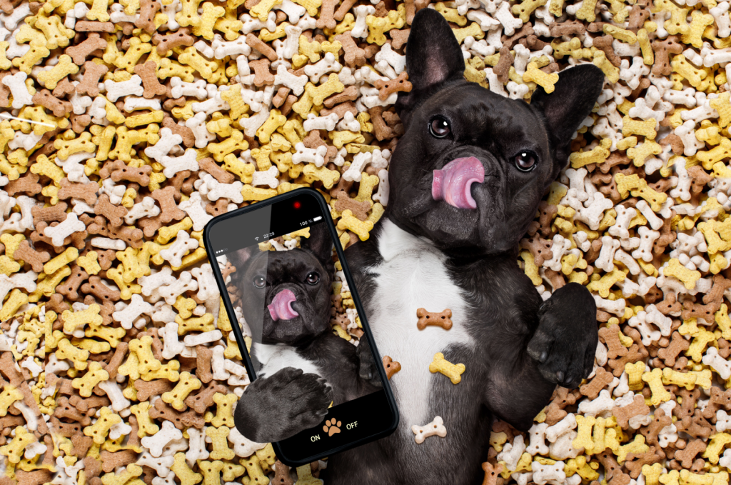 Dogs and cellphones