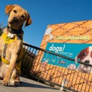 California Science Center: Dogs! A Science Tail + GIVEAWAY