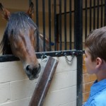 How To Properly Take Care Of Your Horse To Maintain A Good Health