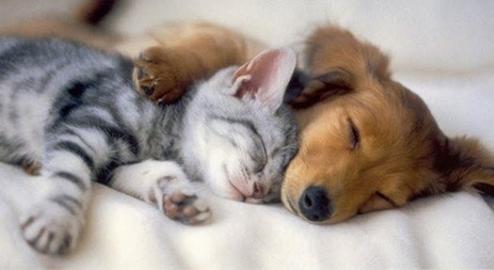 PROGRAMME SOMMEIL Retrouver un sommeil réparateur – Découvertes 9 février et 11 mars