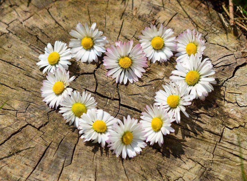 """Cycle méditation 4 soirées """"Les ressources du cœur, chérir la vie"""" du 12 novembre au 21 janvier"""