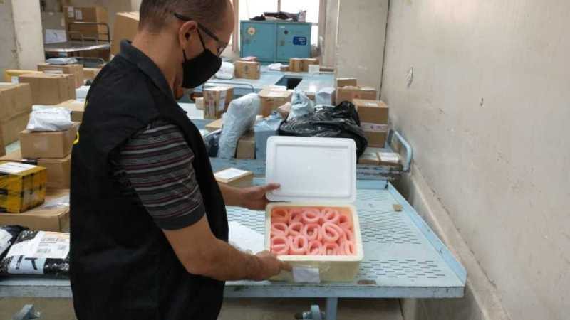 Ovos férteis enviados de forma ilegal via correios são apreendidos em Palmas