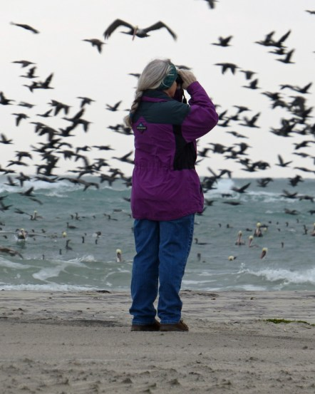 Carol Pahl estimating the great number of Double-creseted Cormorants on Ocracoke Photo by P. Vankevich