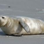 Harboor Seal PS crop_IMG_2993
