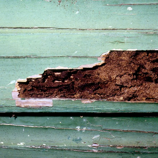 Termite damage. Photo courtesy of Commons Wikimedia