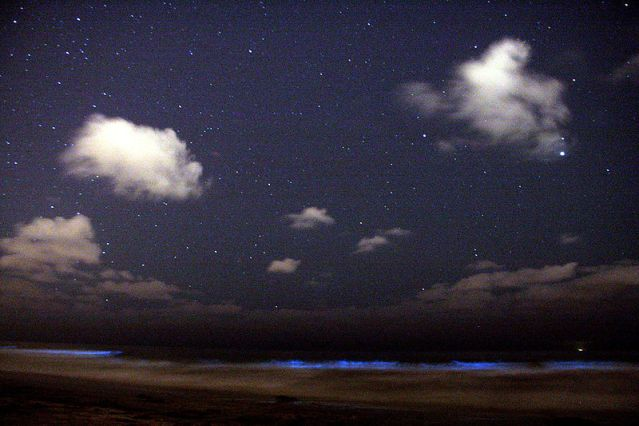 Dinoflagellate_bioluminescence