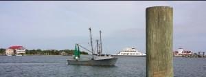 Ocracoke Observer Shrimp 7-18-15