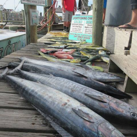WHAT A CATCH! Wahoo, drum, mahi mahi. Photo courtesy of the Gecko Sportfishing.