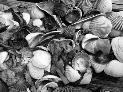 Horwitz shells